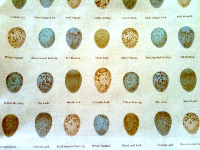 Egg fabric